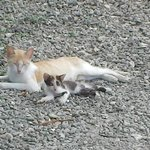 Contented Pele felines, mother and kitten