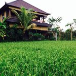 Rice pady field in front of room