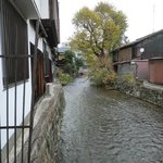祇園白川の流れ、この奥のほうに浮き寝鳥がいた