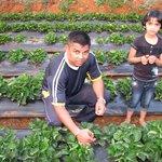 Swaberry farm experience