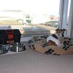Hundeservice mit Körbchen, Näpfen und Leckerlies