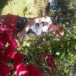 mi hija disfrutando de un jardín de buganvilleas
