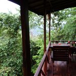 view to the rainforest