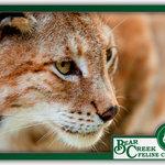 Bear Creek Feline Center