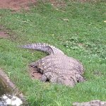 @ the Croc Centre