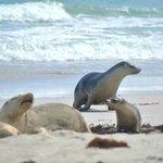 Seals excursion