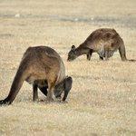 Kangaroos and canapés excursion