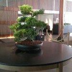 bonsai in lobby