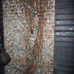 Un arbre recouvert de chewing collés où sont gravées les initiales de ceux qui les ont collés