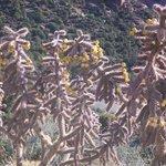 Beautiful Cactus