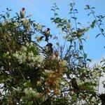 Olha os pássaros a alegrar nossas manhas e final de tarde