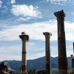 Les ruines de Volubilis avec les cigognes...
