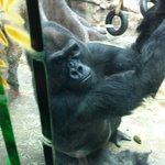 Got to see the gorillas up close and personal