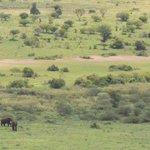 Alberto, questa è per te! due elefanti e IL rinoceronte nero.... piccolo, ma è lui! Grazie!