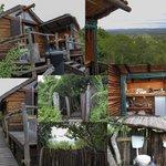 Bush Camp 1