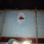 Hotel antihigiénico con cucarachas grandes y hormigas!
