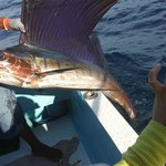 Pretty Sailfish