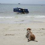 пляж, Тим ждет новых постояльцев