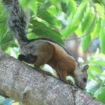 Squirrels around resort