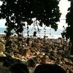 """""""Coral-Beach"""""""