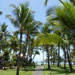 les cocotiers du parc