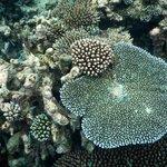 coraux magnifiques