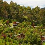 Bush Chalets & Bush Lodges