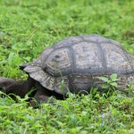 Tortoise on the property