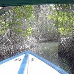 Canal entre manglares