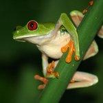 Colin the frog in a bush near the Garden House