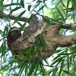 Thomas the sloth in bamboo by the garden house