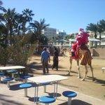 Mikołaj przyjechał na plażę wielbłądem