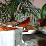 Beautiful birds at breakfast!