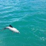 dolphin swimming around boat