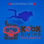 kooxdiving takes your diving with the Bullshark… AMAZING