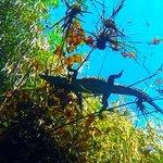 Cenote Carwash enjoy the views and have fun..kooxdiving tulum