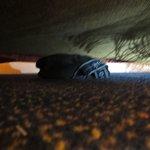 Some mens underwear under my bed!