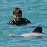 Swimming with Hector's Dolphins