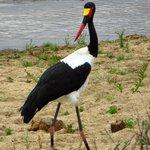 Birds with atttitude
