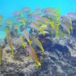 Sea life in the reserve makes it a safe and magical place