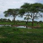 the waterhole (bar view)