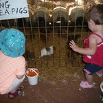 Feeding the guines pigs kept the little kids entertained