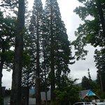 100 jährige Bäume