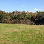 公園内の芝生