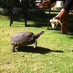 paca the hotel tortise