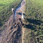 Walking the dogs in the nature reserve - early winter