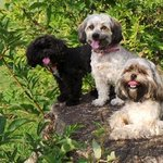 The dogs enjoying a rest on one of the many tree stumps around the park