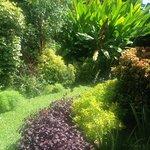 lush grounds