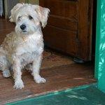 Unser Hund bewacht das Roulette