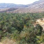L'oasi vicino a Whaiba Sands